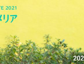 ONLINE STUDIO LIVE 2021 『夏の終わり、プルメリア』開催!